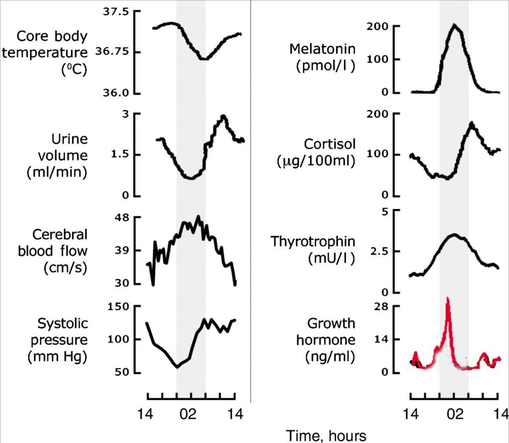 circadian-rhythms