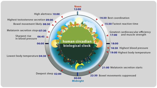 human-circadian-biological-clock1