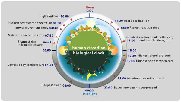 human-circadian-biological-clock1